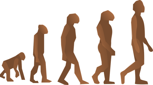 evolution-24560_960_720.png